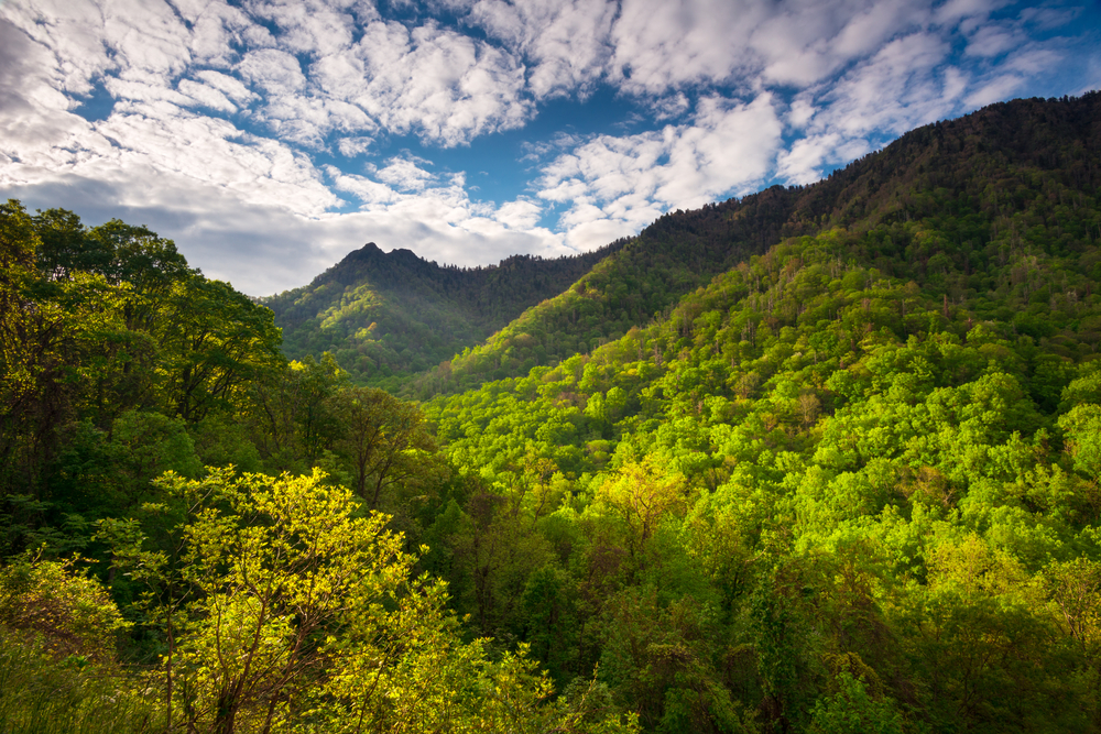 view of the Great Smoky Mountains in spring