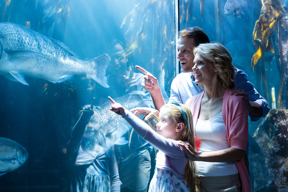 family pointing at fish at Ripley's Aquarium of the Smokies
