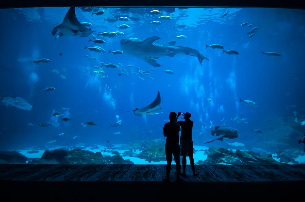 two men stand in front of aquarium filled with stingrays and shark