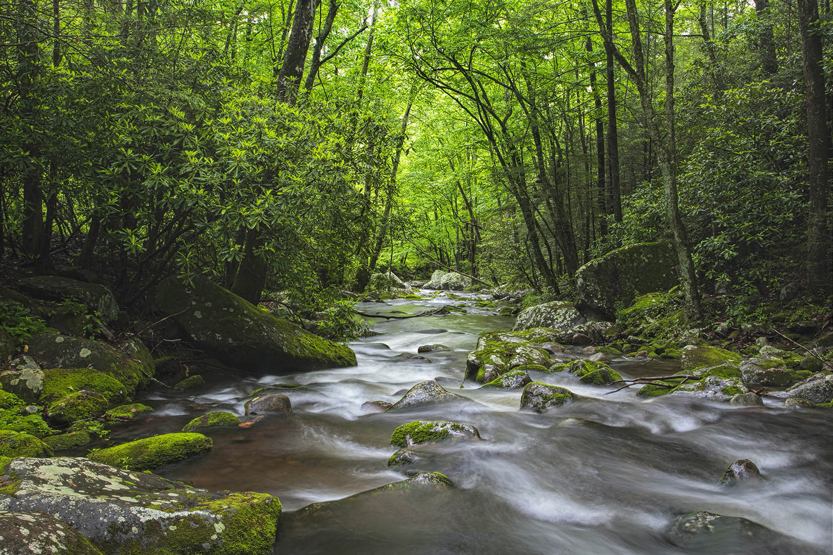 beautiful stream in the Great Smoky Mountains
